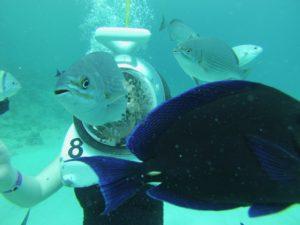 Viendo peces con escafandra en la isla de San Andrés