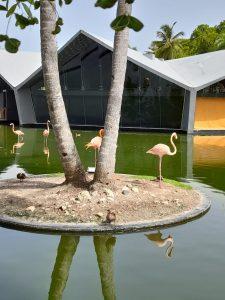 Estas preciosuras de flamingos los encuentras en el hotel, libres y tranquilas
